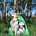 Koiran teltta