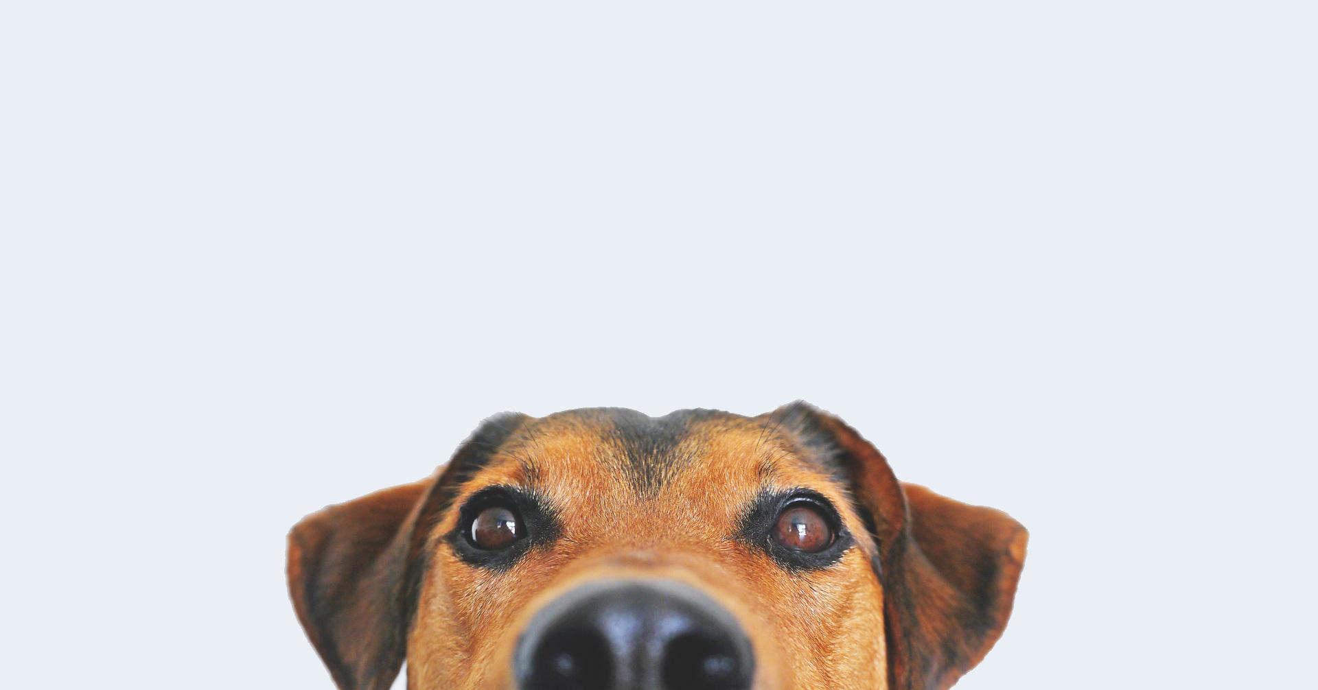 Koiratuotteet ja tarvikkeet – Retkelle.com